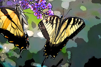 Photo: Poster edges (3/2/1) - butterflies on butterfly bush
