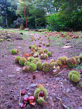 Photo: Chestnuts on the ground