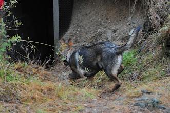 Photo: Kahn på vei ned i den mørke bunkersen