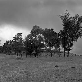 by Onkar Plaha - Landscapes Mountains & Hills ( onkar plaha, b&w, black & white, landscape )