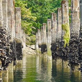High rises by Gabriela Zandomeni - Nature Up Close Water