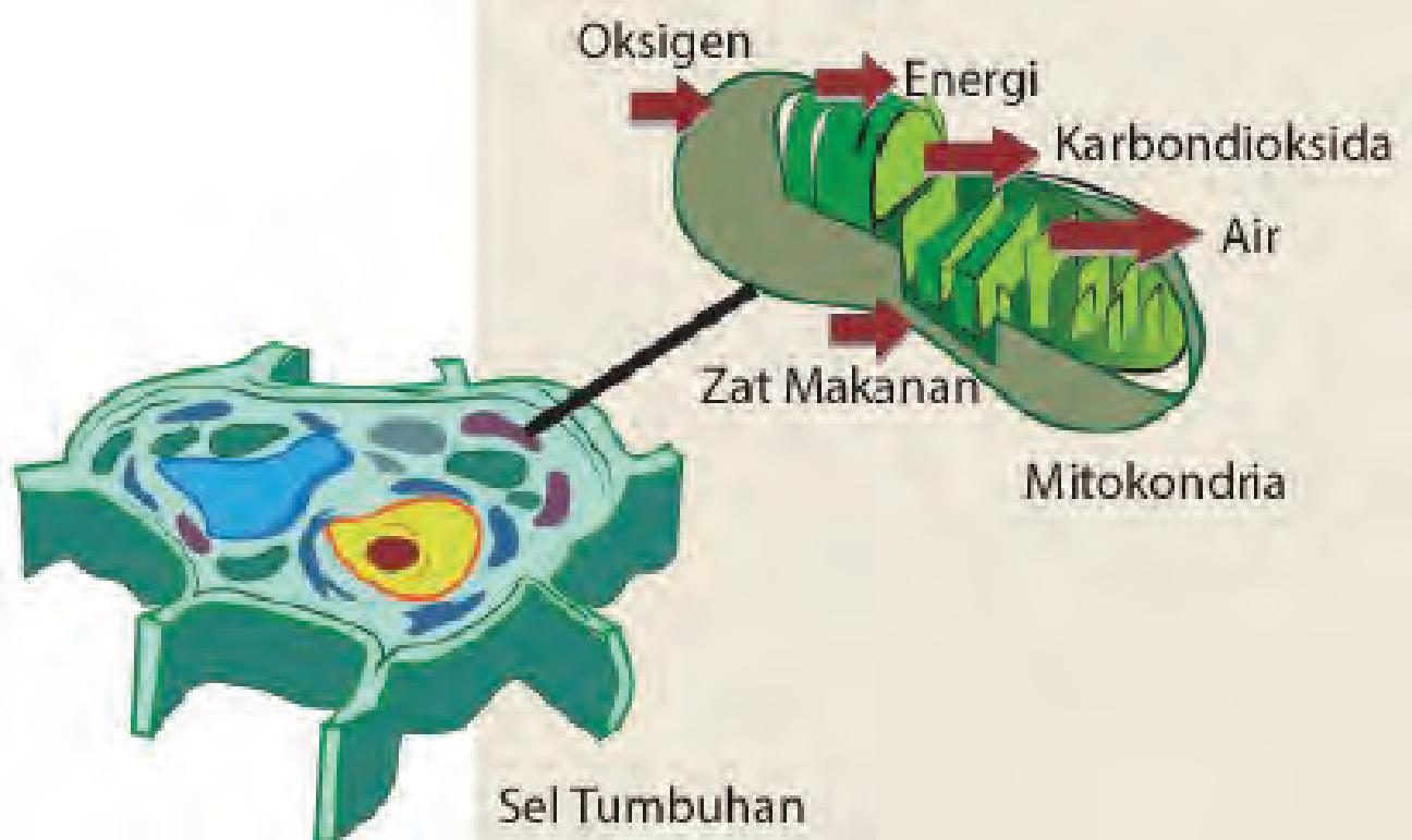 energi dalam sel
