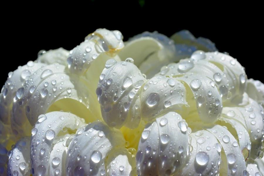 Bijelo-nježno by Jelena Puškarić - Nature Up Close Flowers - 2011-2013 (  )