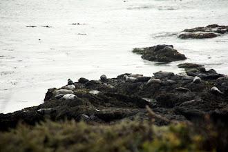 Photo: seals