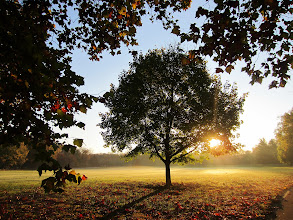 Photo: Lone tree in the morning and mist at Eastwood Park in Dayton, Ohio.