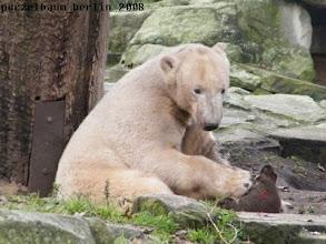 Photo: ... den muss Knut ganz genau begutachten ;-)