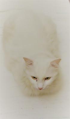Bianco su bianco. di matteo_maurizio_mauro