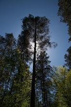 Photo: Odpoczynek w cieniu drzewa.