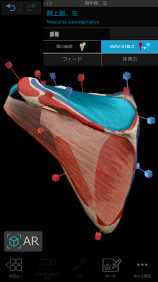 ヒューマン・アナトミー・アトラス2021: 3Dによる完璧な人体のおすすめ画像3