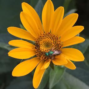 by Melissa Bieri - Flowers Single Flower