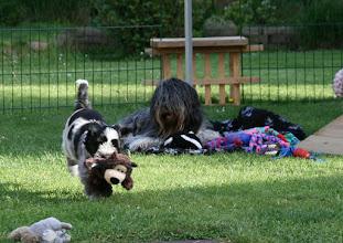 Photo: Cini und Ellie gewähren allen Tieren einen Ausflug in den Garten