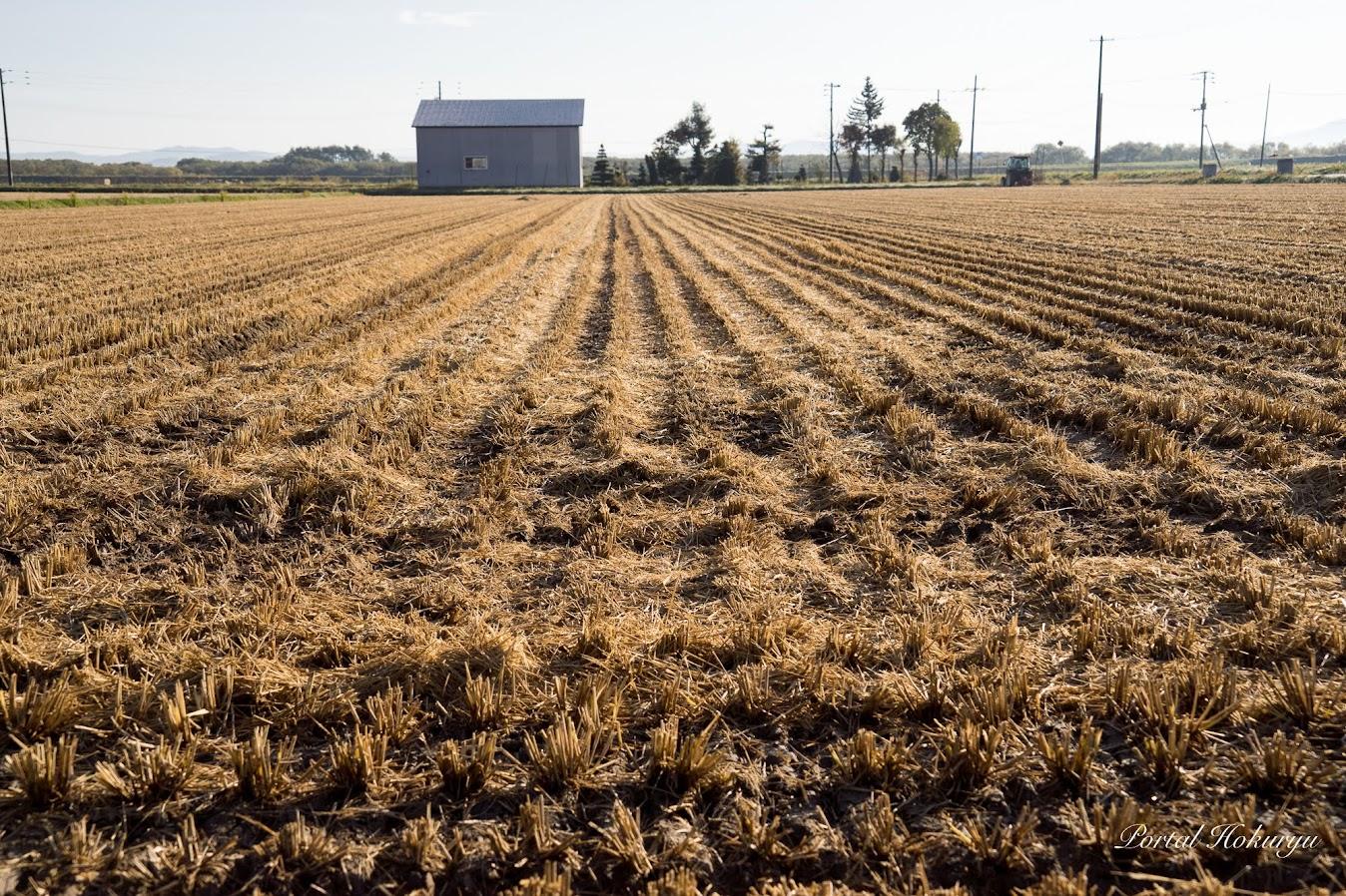 収穫後の圃場(撮影:2018年10月20日)