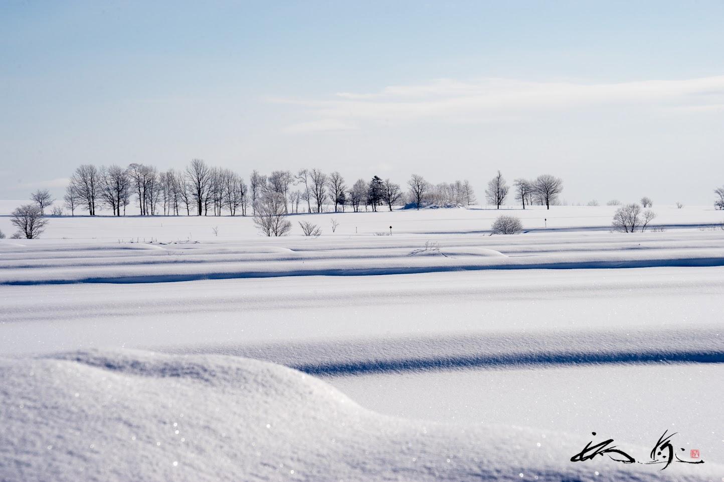 樹木が並ぶ雪野原