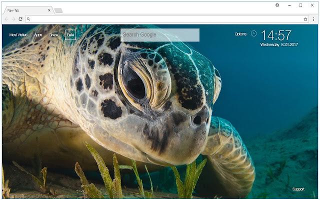 Turtle Wallpaper HD Turtles New Tab Themes