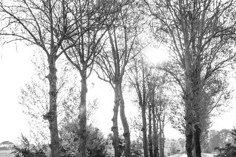 Tracce d'alberi di Zampi