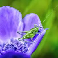 Green on purple on green di
