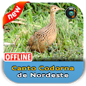 Canto Cordona de Nordeste icon