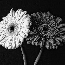 B&W flower 06 by Michael Moore - Black & White Flowers & Plants