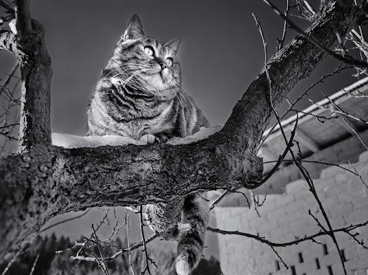 Sull'albero di Moreno re