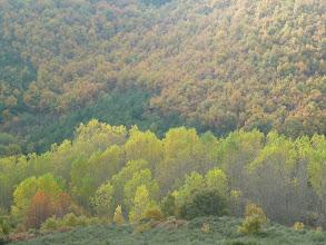 Photo: robles, pinos , castaños, y chopos