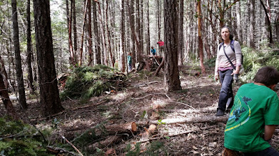 Photo: This is the Page Creek Community Forestry Project. On April 10, students from the Dome School visited the project to see the work and collect some poles to build a fort!