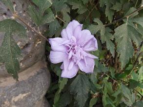 Photo: Неизвестный цветок