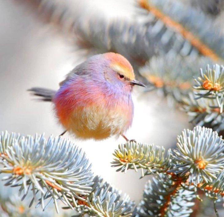 white-browed-tit-warbler-2
