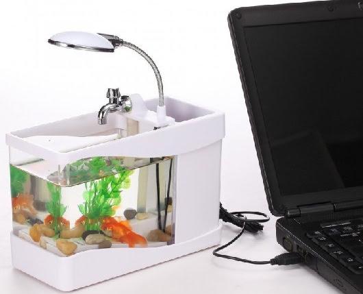 Akuarium dengan Ikan kecil