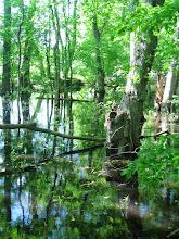Photo: Trees in water at Wegerzyn Gardens in Dayton, Ohio.
