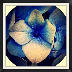 by Brian Boyer - Flowers Single Flower