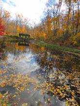 Photo: Fiery fall leaves around and in Dogwood Pond at Hills and Dales Metropark in Dayton, Ohio.