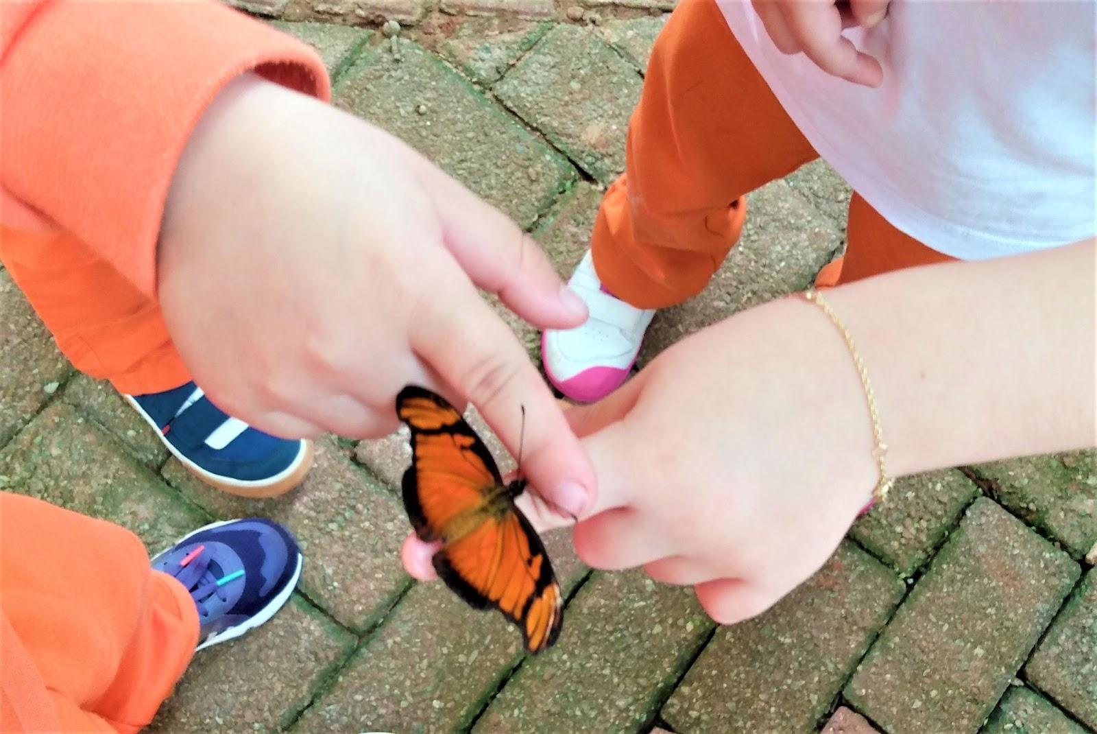 A imagem mostra uma borboleta com asas cor de laranja, com detalhes pretos, pousada na mão de duas crianças.