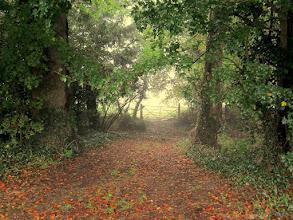 Photo: Autumn in Bourne Park Road