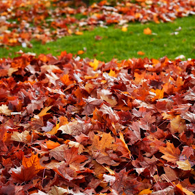 Fall Leaves 2 by Terry Oviatt - Nature Up Close Leaves & Grasses (  )