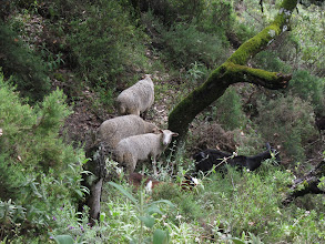 Photo: ... some sheep ...