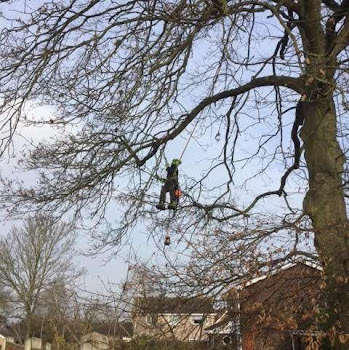 tree climbing clients backyard in worcestershire