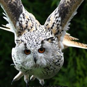 by Darren Maud - Animals Birds