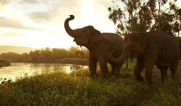 Norte da Tailândia