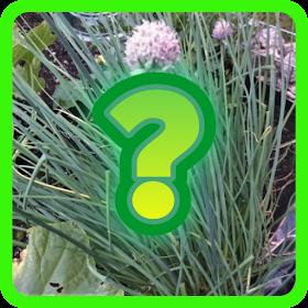 Pflanzen - Botanisch
