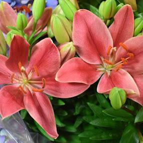 by Mary Stewart - Flowers Flower Gardens