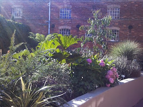 Photo: The old Henry Lunn & Dodson building behind New World plants in the Joseph Banks garden.
