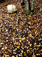 Photo: In the forest in the fall leaves litter the ground once more as it is so shall it be again till we meet further down the road right here