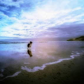by Andrew Balsillie - Landscapes Beaches