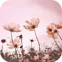 🌸 Floral Wallpapers icon