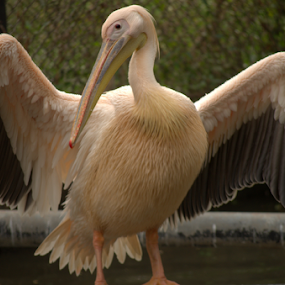 having sun bath by Riju Banerjee - Animals Birds ( birds )