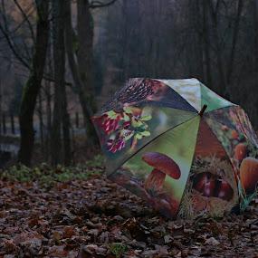 deštník v lese  by Jarka Hk - Artistic Objects Other Objects ( forest, czech republic, umbrella, nature, photo, decoration )