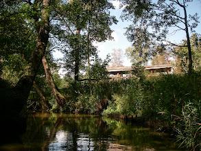 Photo: w lesie