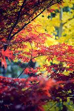 Photo: Red-VS-Yellow