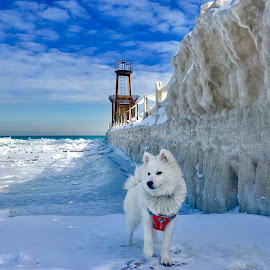 MONA'S PIER by Louis Perlia - Animals - Dogs Portraits ( water, fluffy, lake michigan, winter, dogs, american eskimo, ice, white, puppy, cute )