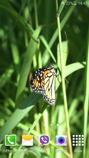 蝶のビデオライブ壁紙